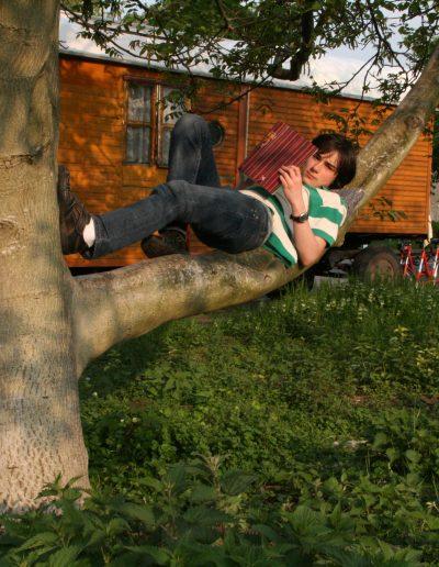 Baum-Schule.
